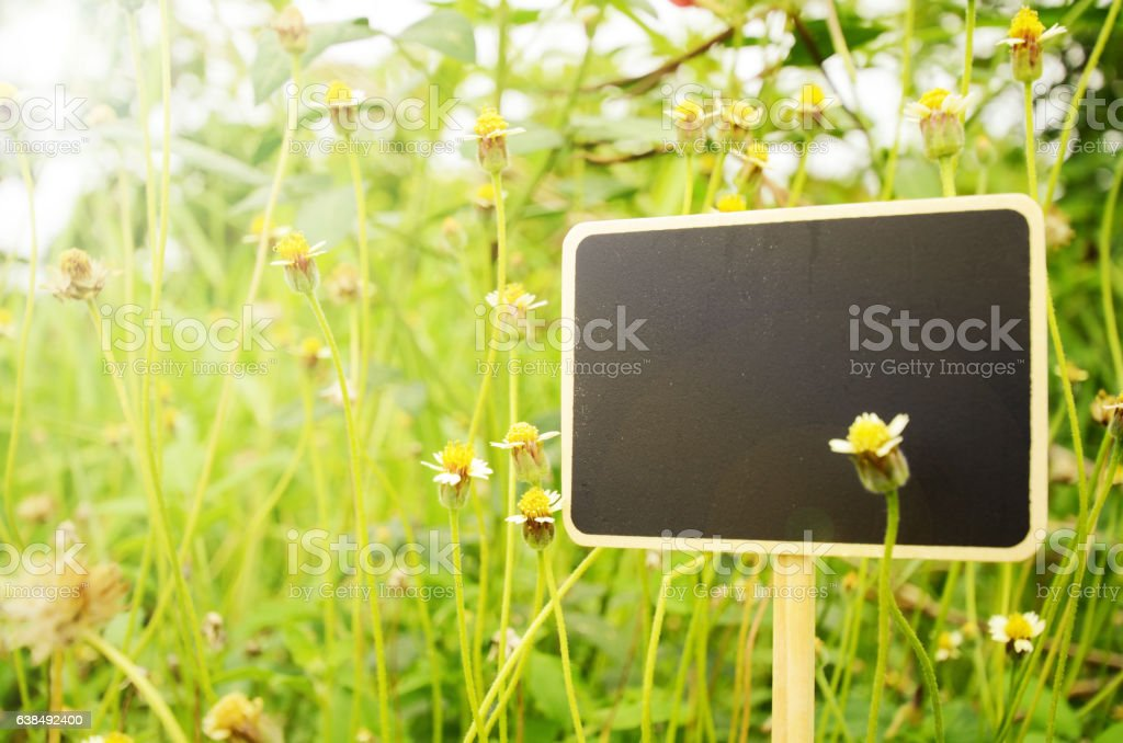 Blank wooden board signs on small flowers background. stock photo