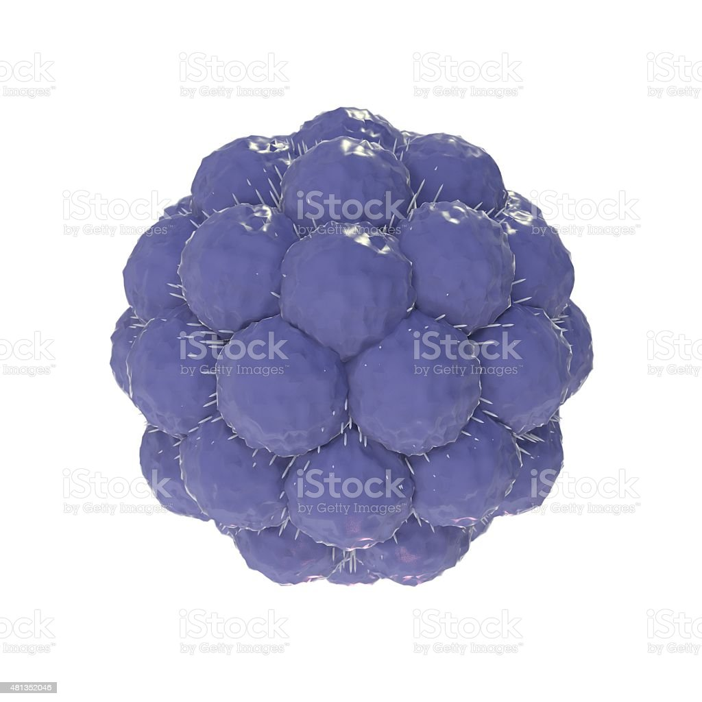 Blastocyst stock photo