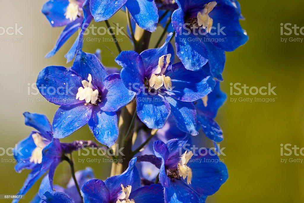 Blaue Bl?ten stock photo