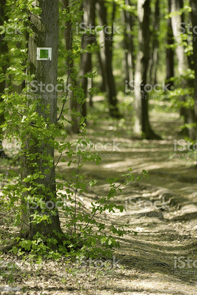 blaze in the forest. royalty-free stock photo