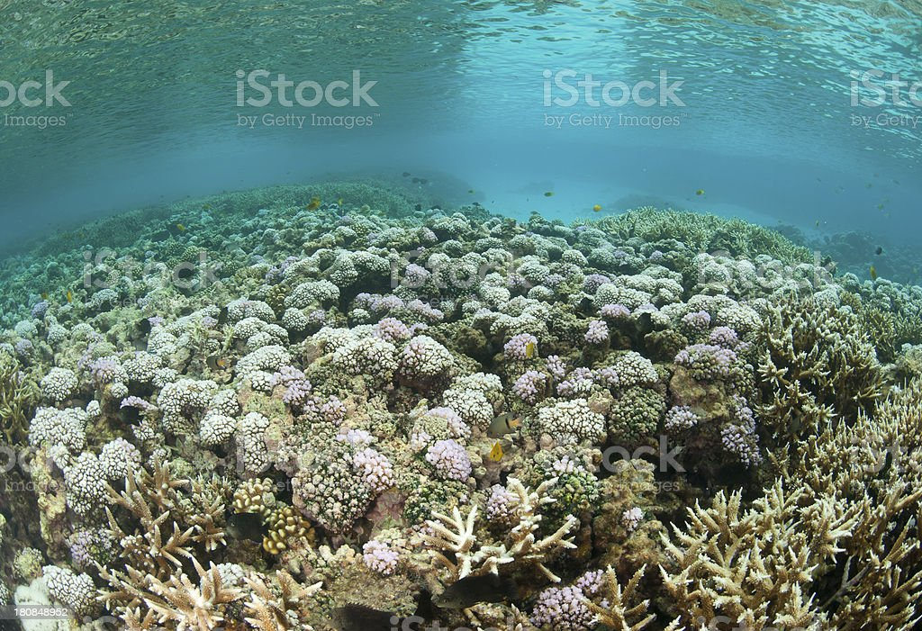 bleached coral reef stock photo