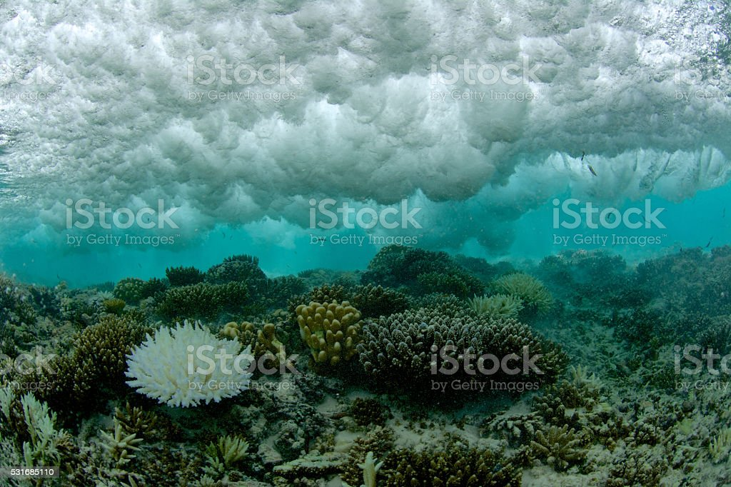 bleached coral under breaking wave stock photo