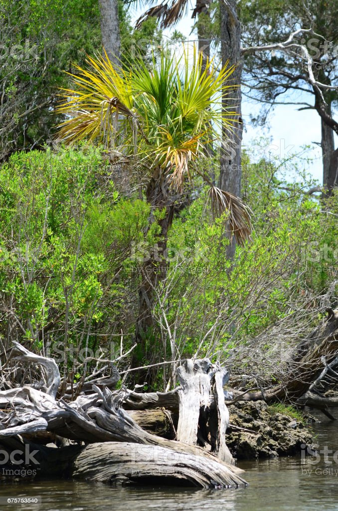 Bleached wood on coastal habitat with young plam stock photo