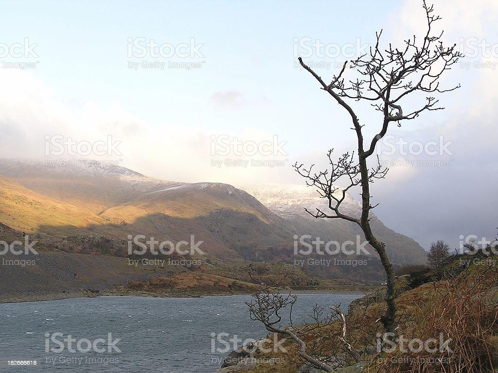 Bleak lake royalty-free stock photo