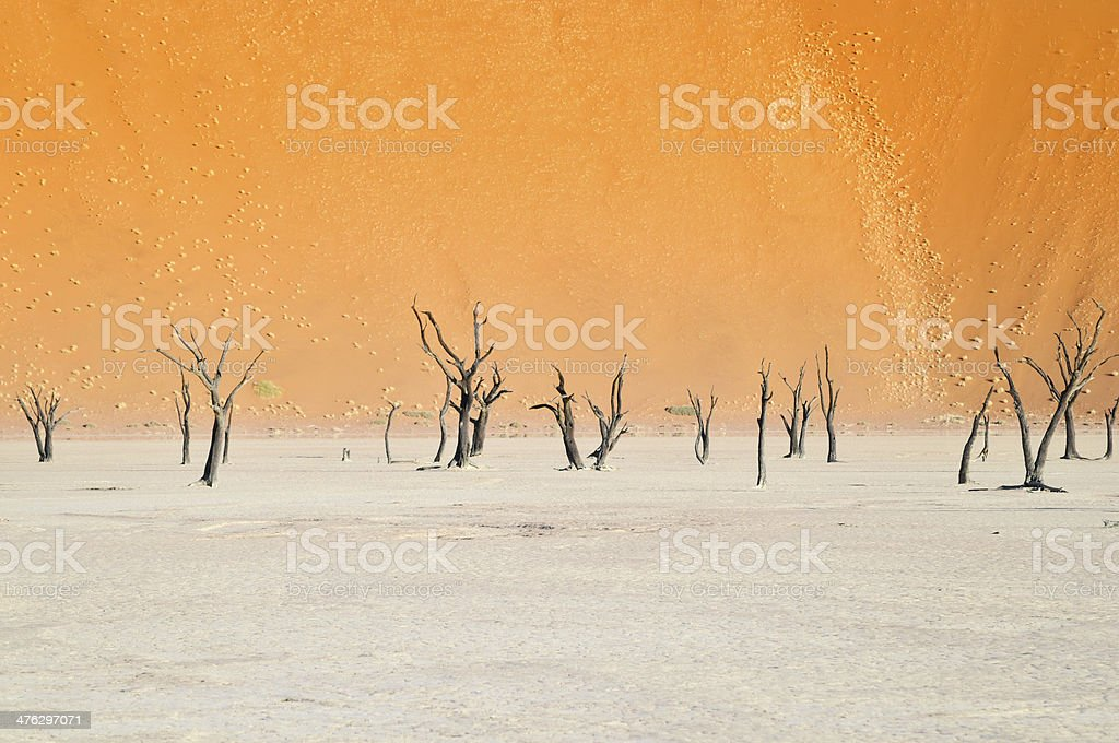 bleak landscape with dead trees stock photo