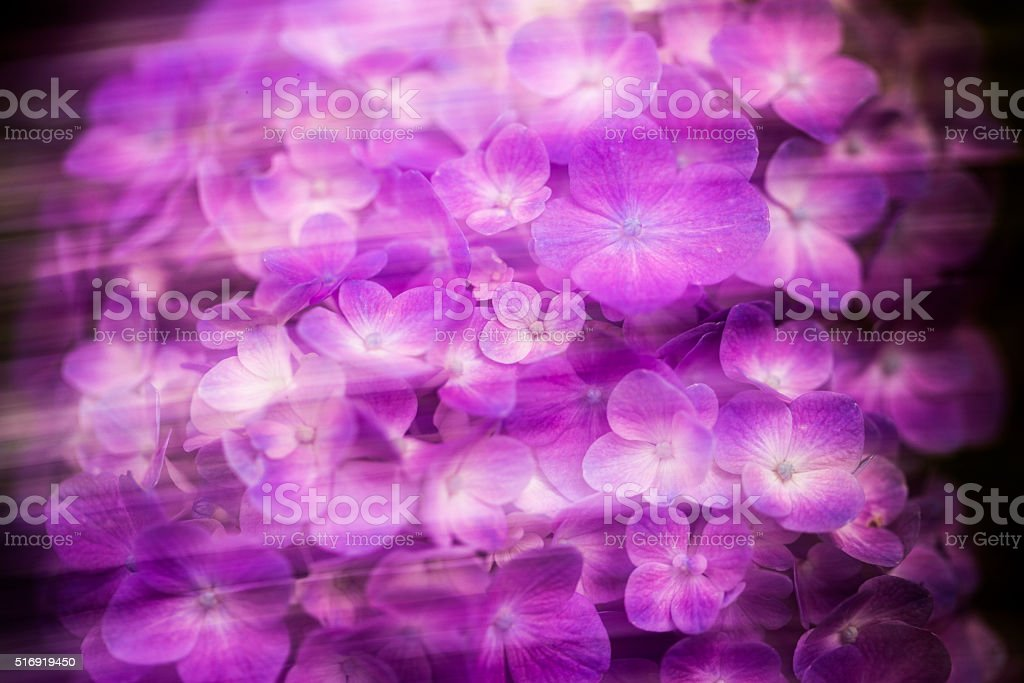 Bleed purple stock photo