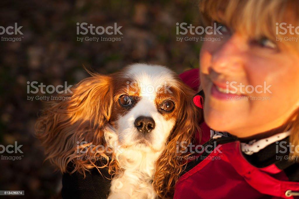 Blenheim Cavalier King Charles Spaniel with elderly woman stock photo