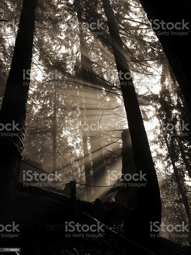 Blessed By The Sun royalty-free stock photo