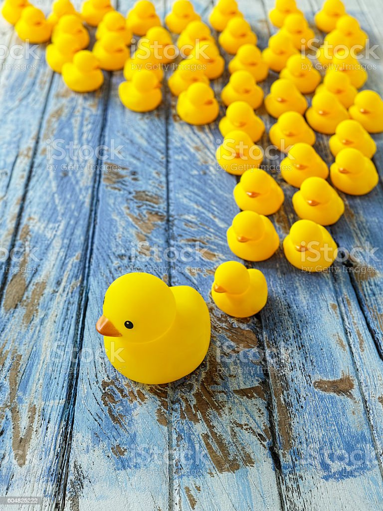Blind followers, concept rubber duck image. stock photo