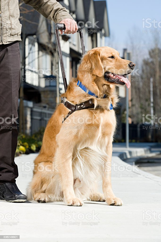 Blind man and a guide dog stock photo