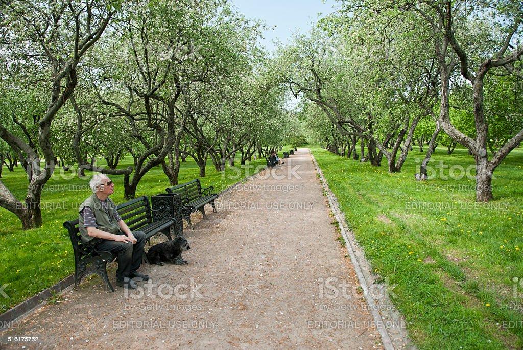 Blind man enjoys birdsong in garden of Kolomenskoye, Moscow, Russia. stock photo