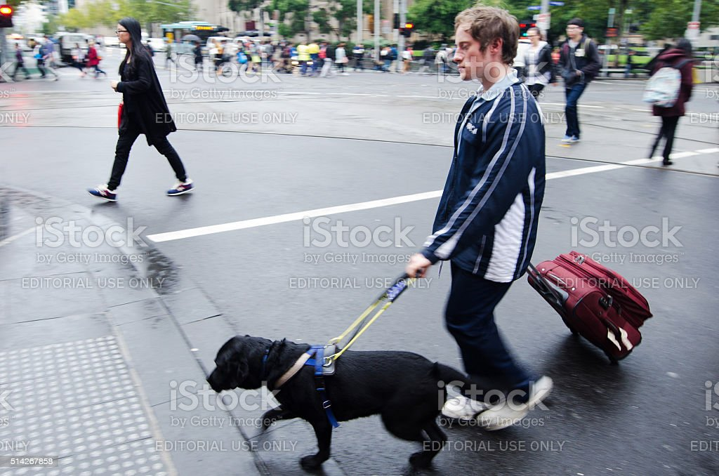 Blind man is led by his guide dog stock photo