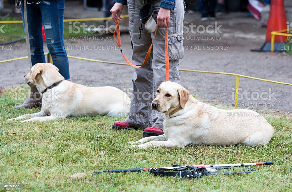 Blind people with their guide dogs stock photo
