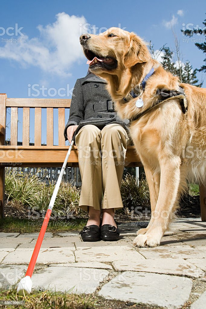 Blind woman and a guide dog stock photo
