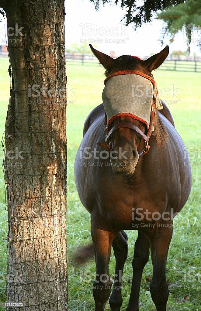 Blindfolded Horse stock photo