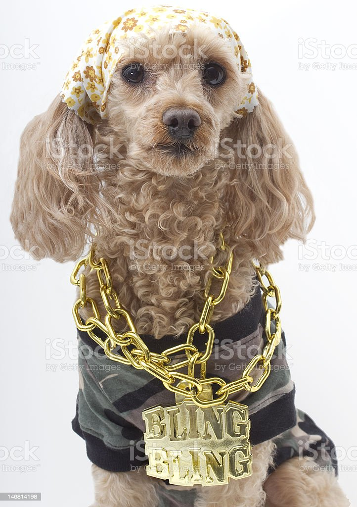 Bling Dog in Camouflage stock photo