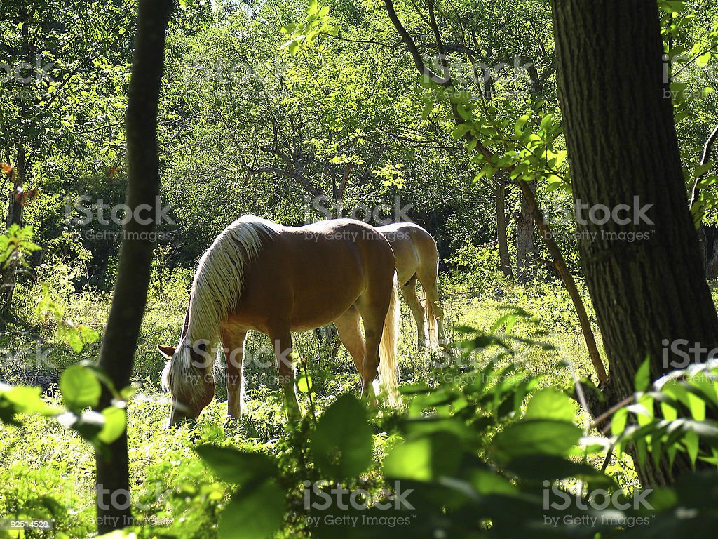 Blissfully grazing stock photo