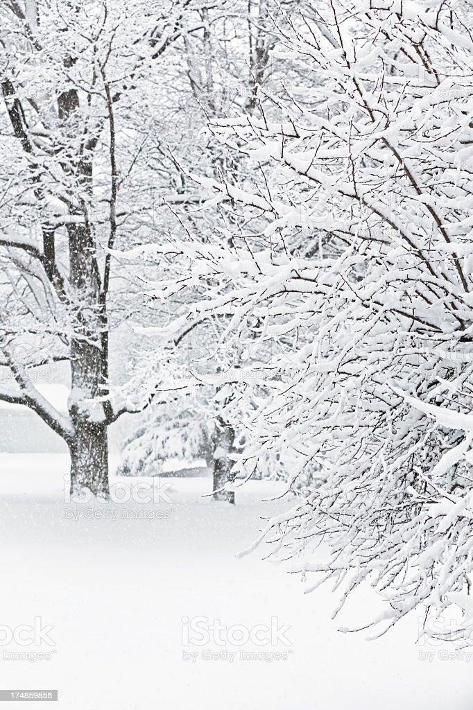 Blizzard Abstract Trees stock photo