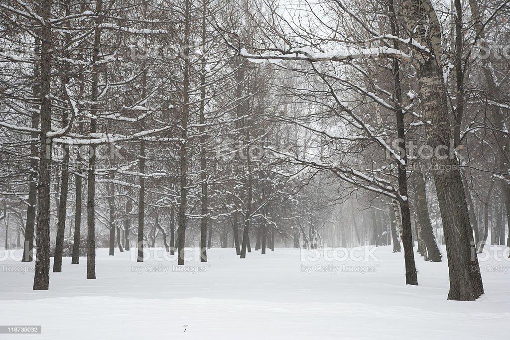 Blizzard in park. stock photo