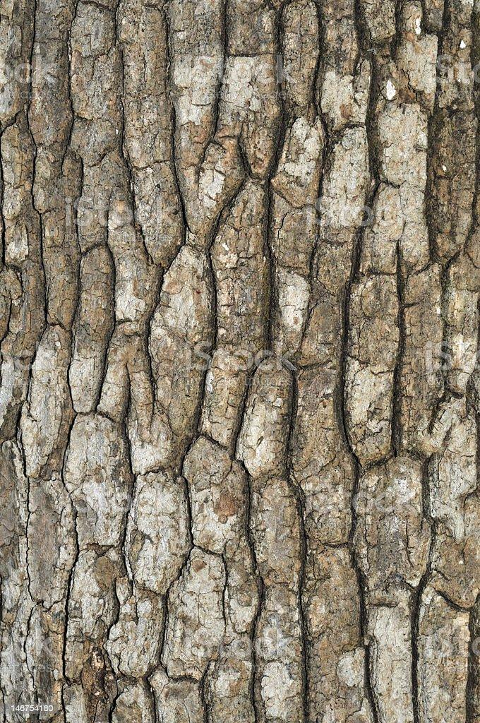 Blocky tree bark stock photo