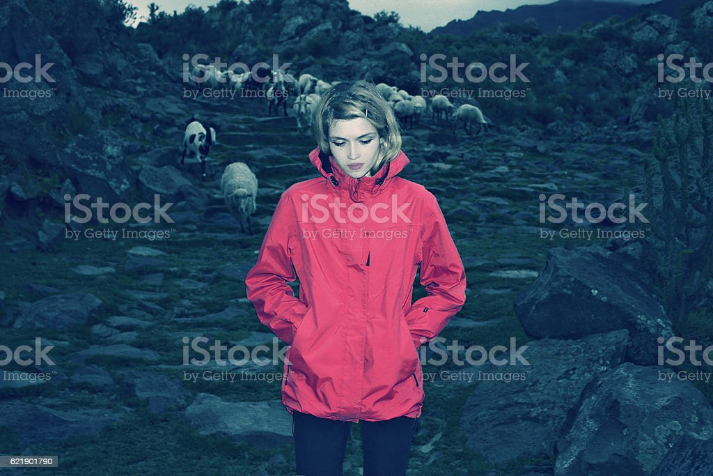 blond caucasian girl leading sheep and goats through mountain, Peru stock photo