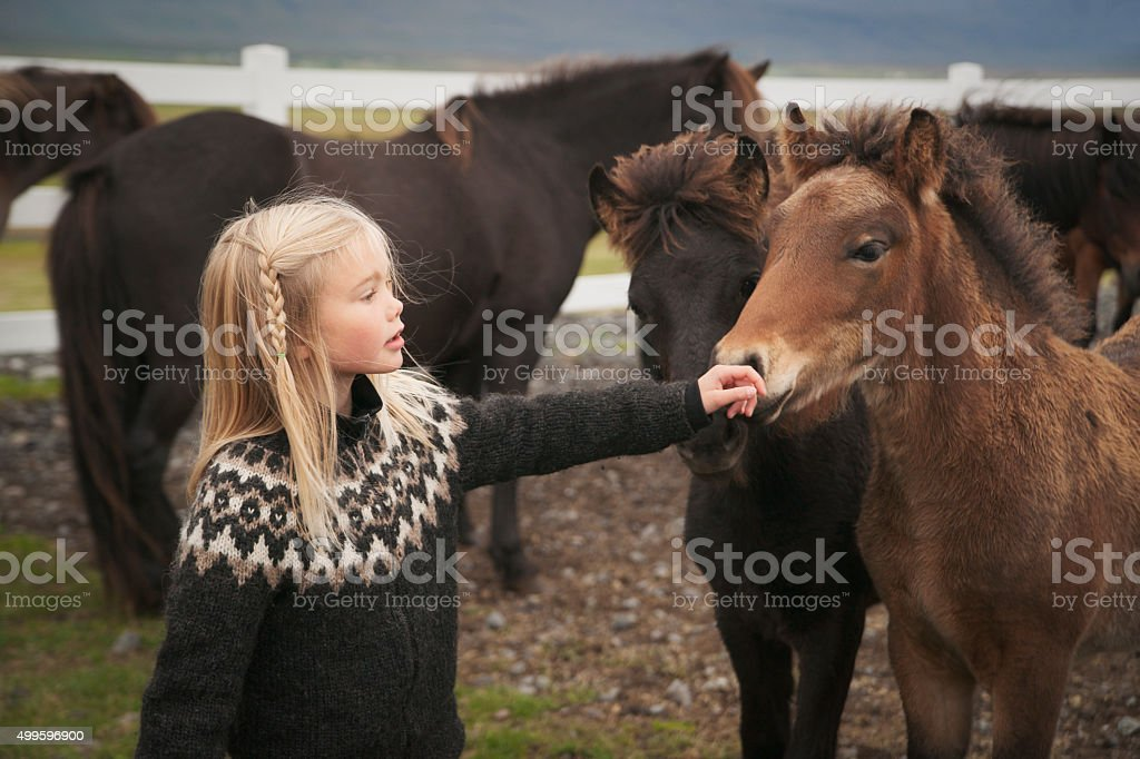 Blond Icelandic girl touches the nose of a pony stock photo