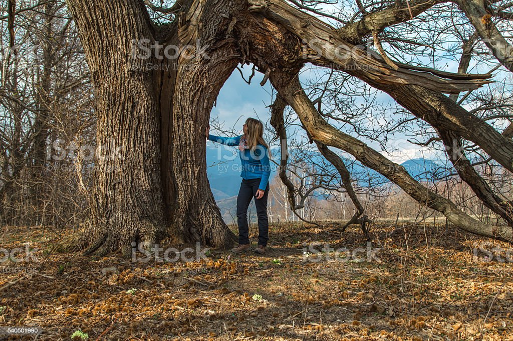 Blonde lady under the giant chestnut tree stock photo