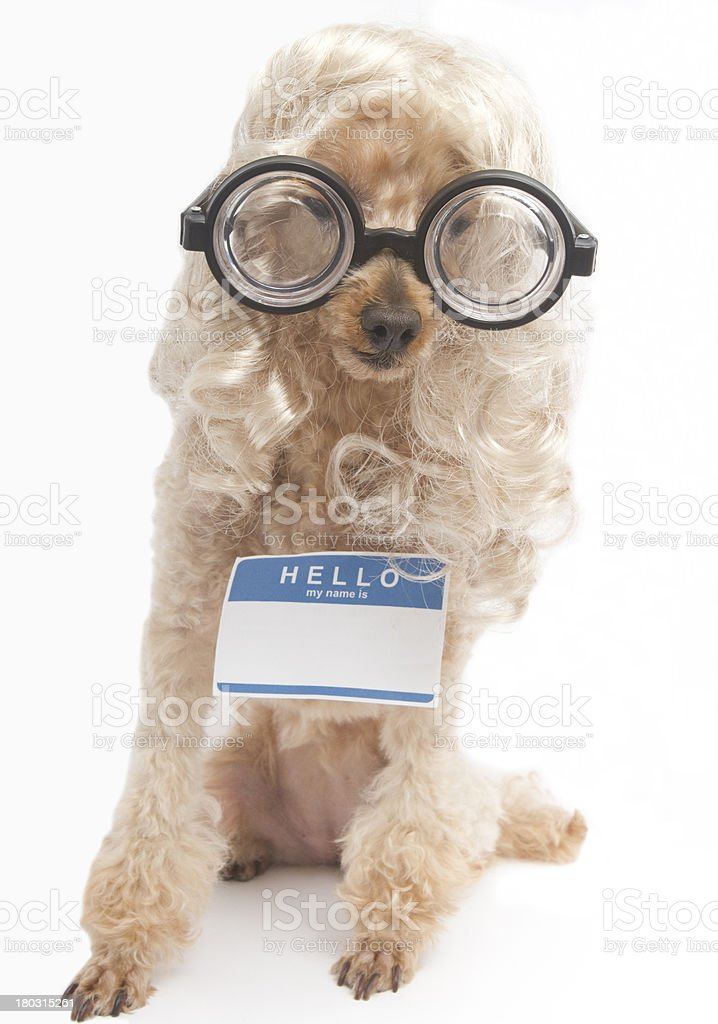 Blonde Nerd with Name Tag royalty-free stock photo
