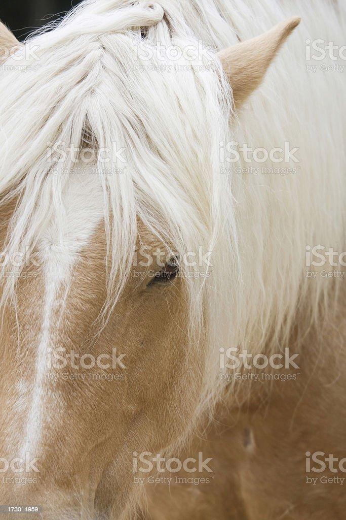 Blondie stock photo