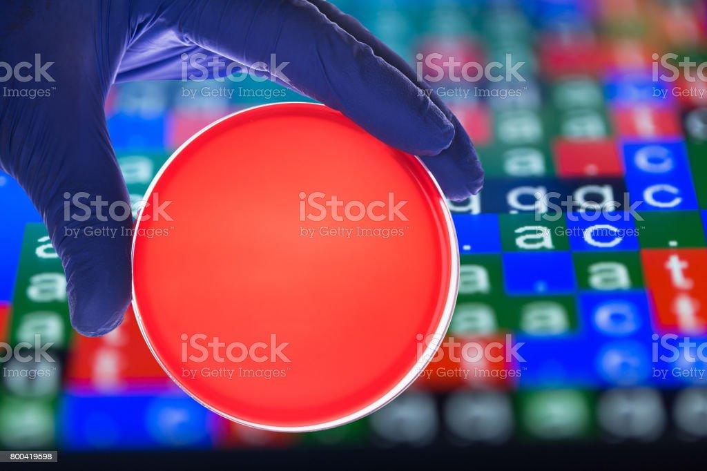blood agar in the petri dish macro shot stock photo