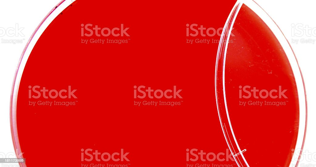 Blood agar plate royalty-free stock photo