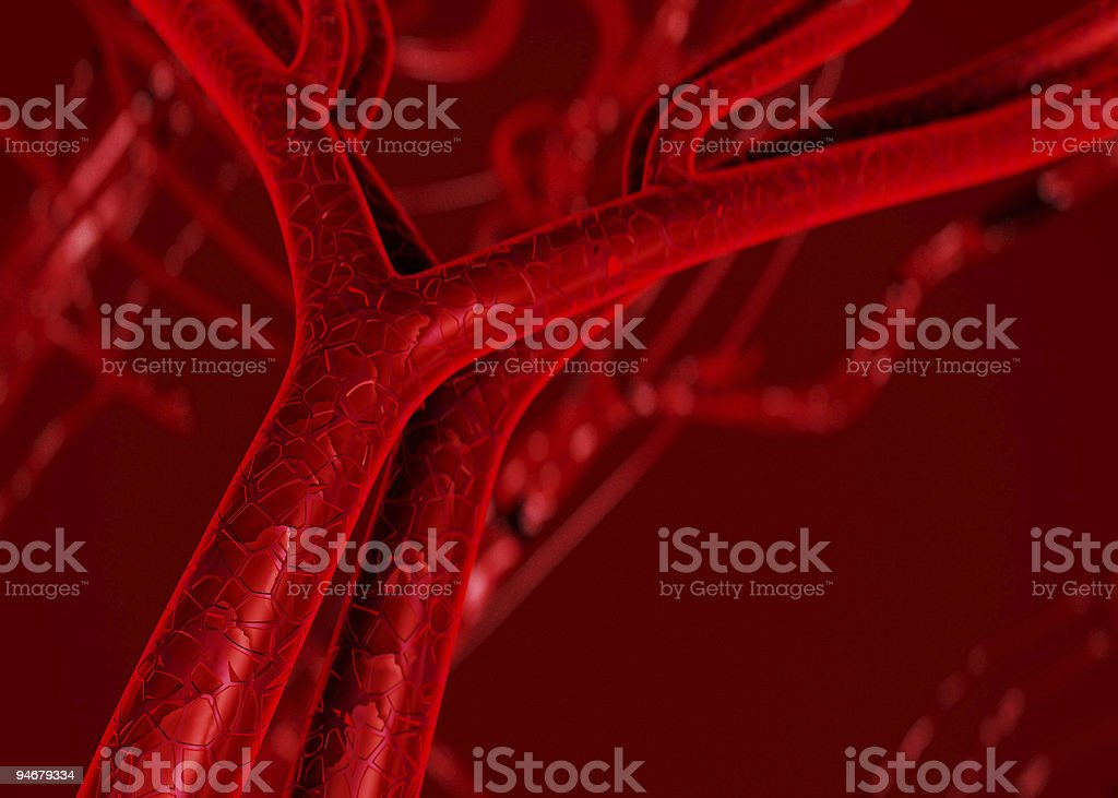 Blood arteries and veins photograph royalty-free stock photo