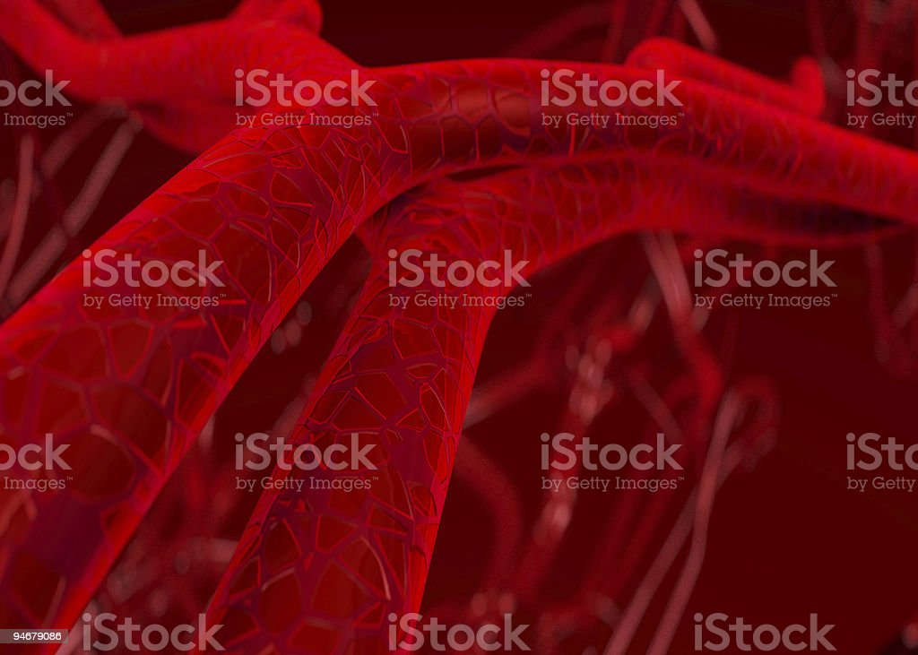 Blood arteries and veins stock photo