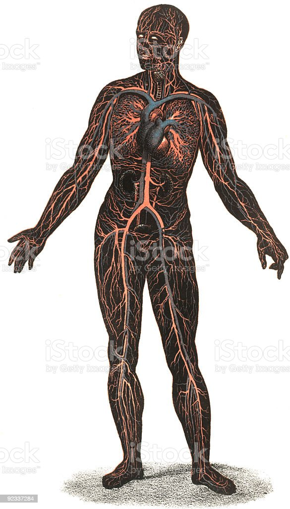 Blood Circulation stock photo