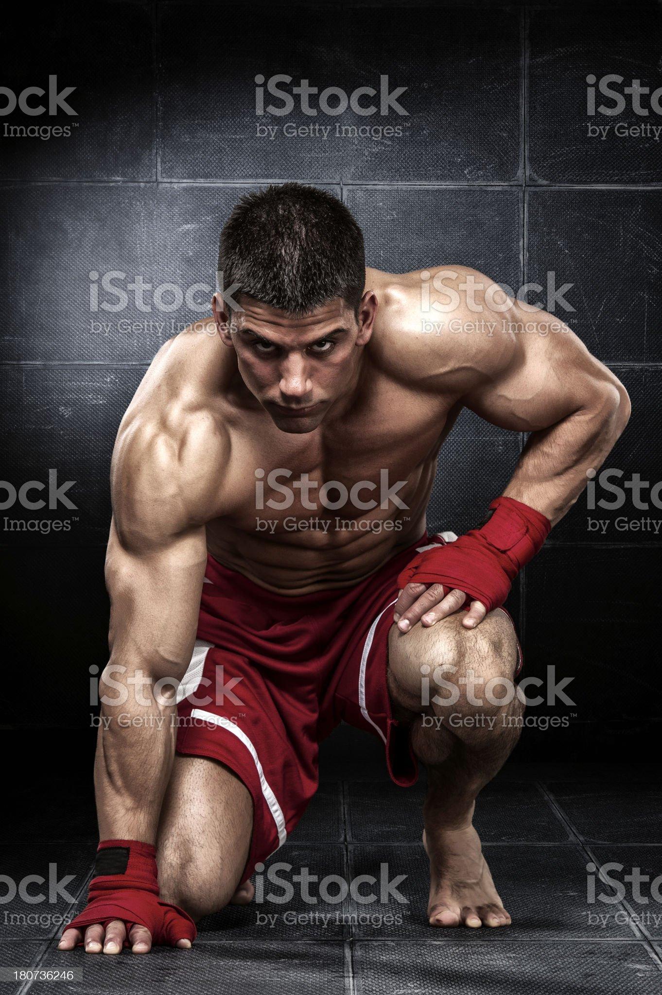 Blood Sport royalty-free stock photo