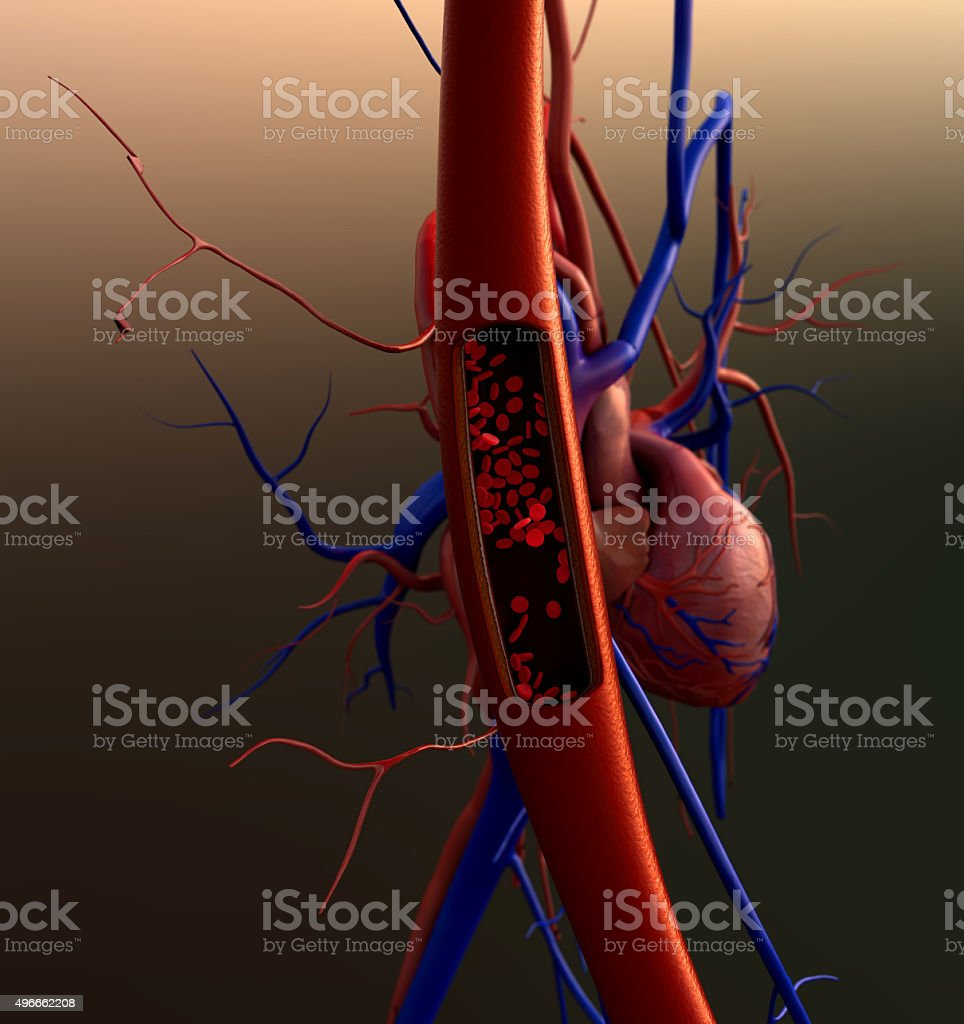 blood vessels, erythrocyte stock photo