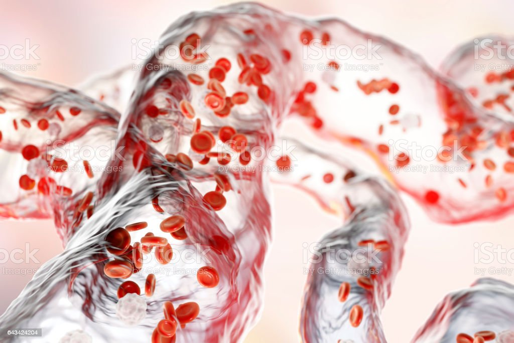 Blood vessels with flowing blood cells stock photo