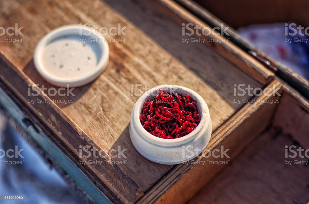 Bloodworm for fishing stock photo