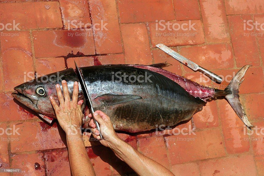 Bloody Mediterranean tuna fish preparation royalty-free stock photo
