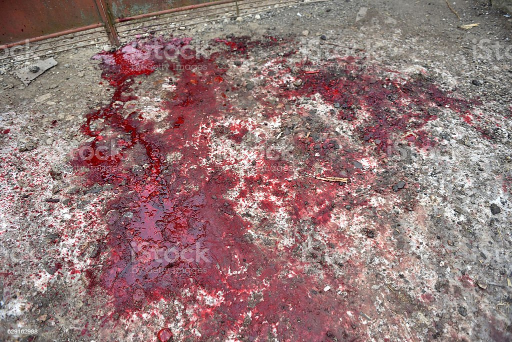 Bloody red snow after a pig cutting stock photo
