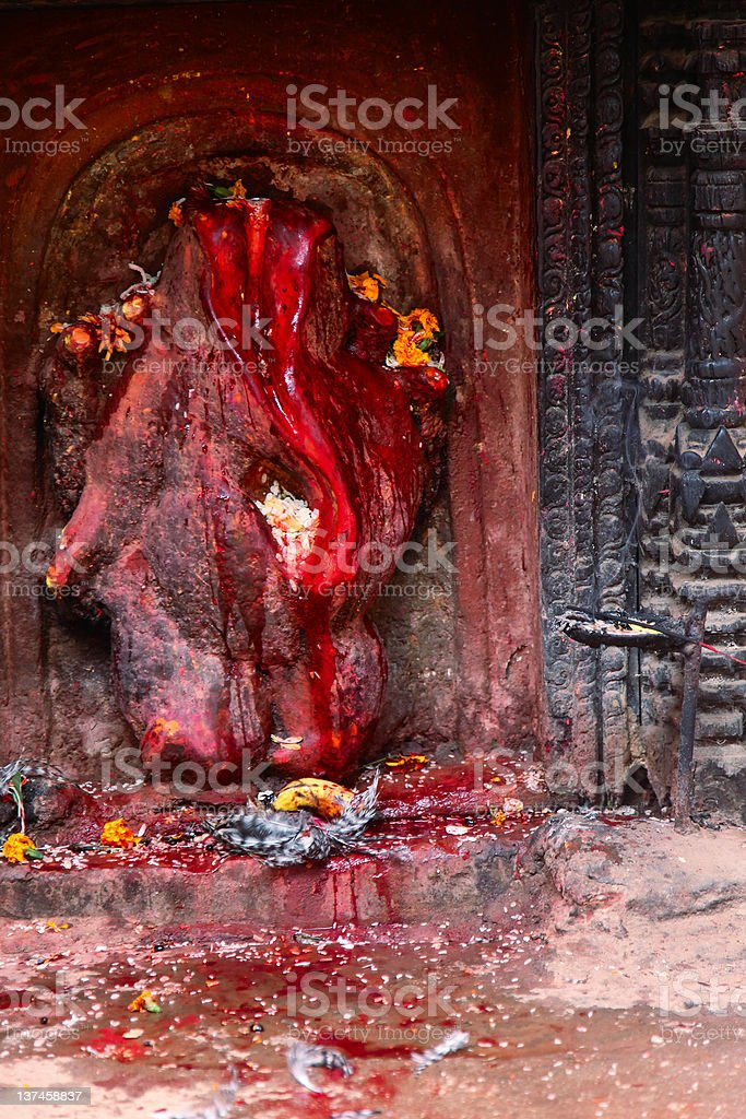 Bloody sacrifice stock photo