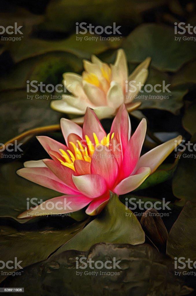 Bloom of waterliy stock photo