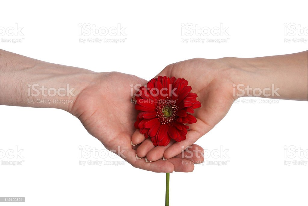 bloom royalty-free stock photo