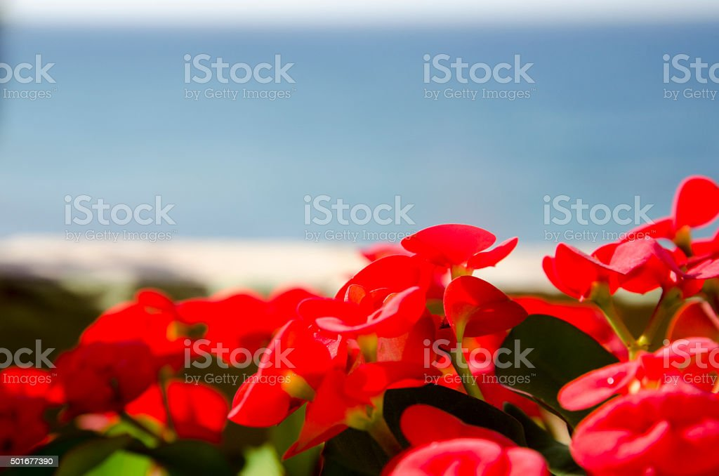 Blooming against sky and ocean stock photo
