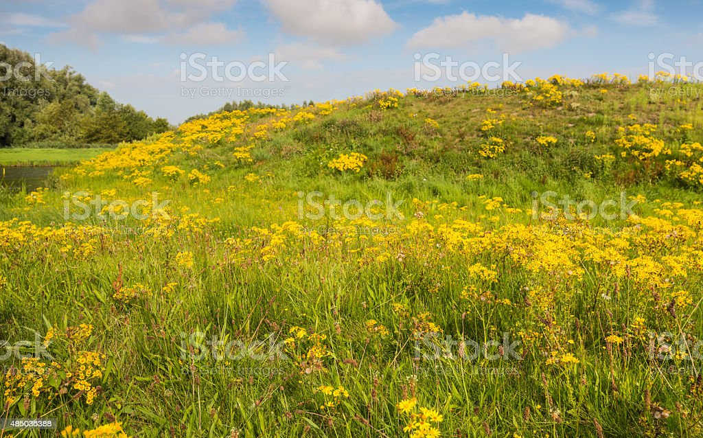 Blooming and overblown wild plants in summertime stock photo