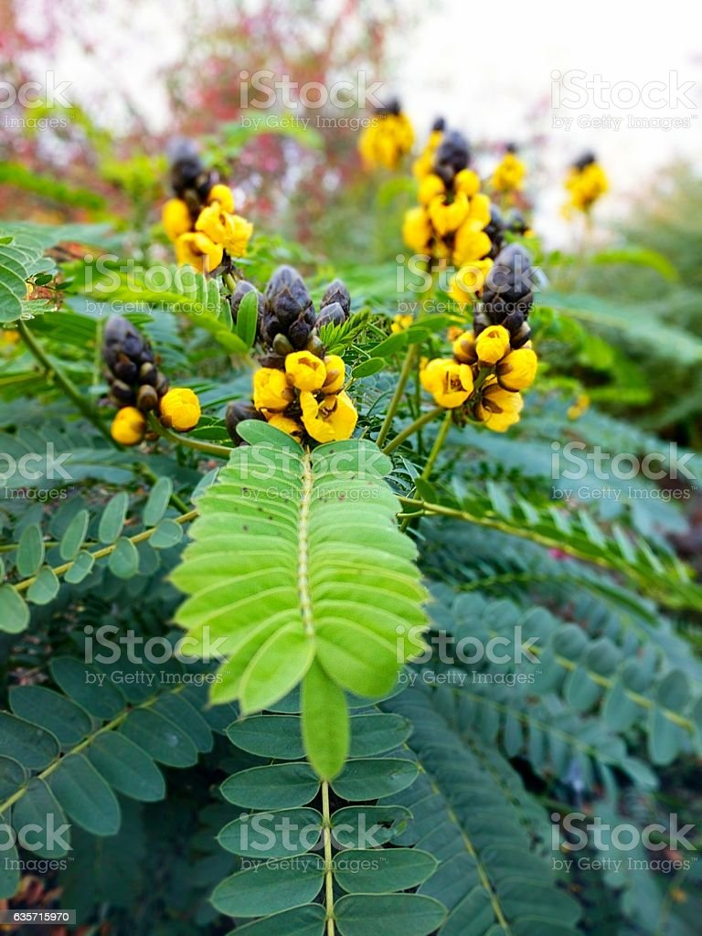 Blooming Black and Yellow Flowers stock photo