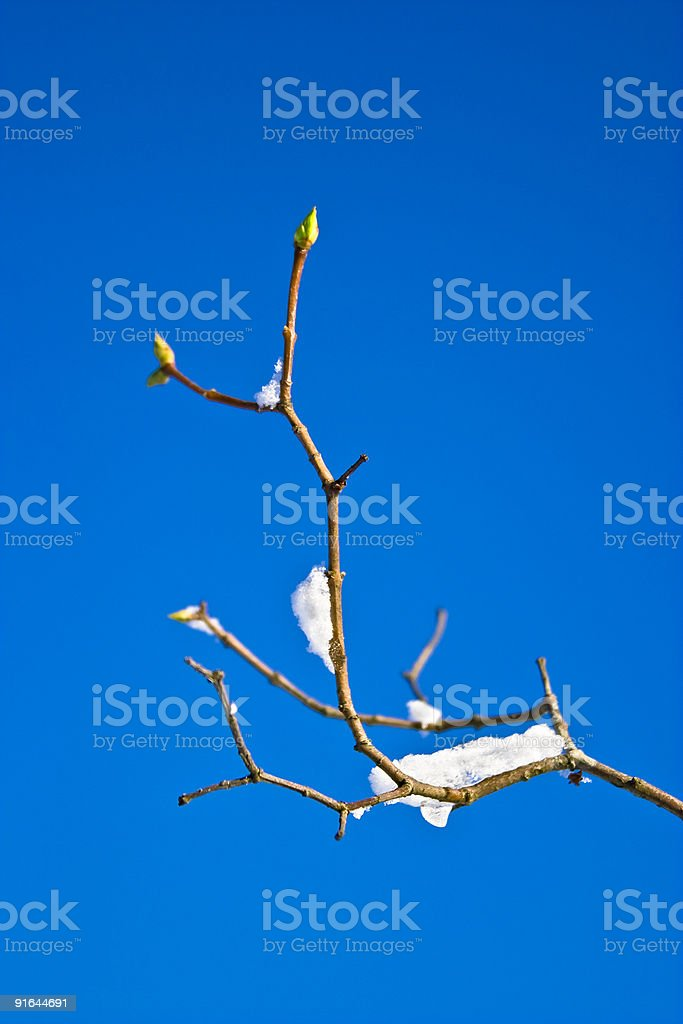 Blooming Branch royalty-free stock photo