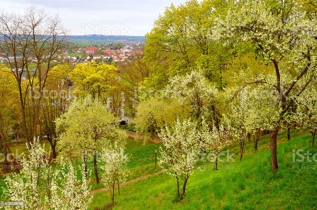 Blooming cherry trees in the garden near Men Monastery stock photo