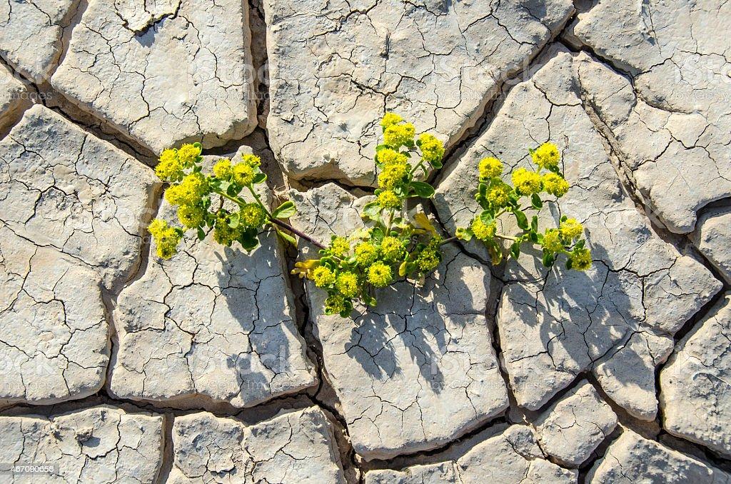 Blooming Desert Floor stock photo