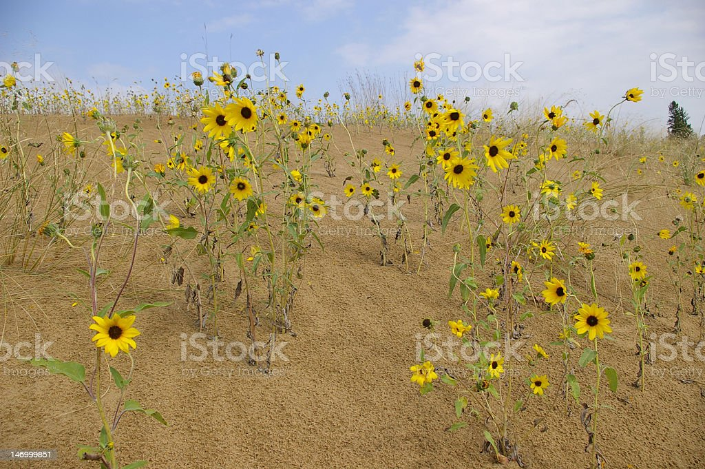 Blooming Desert stock photo
